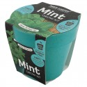 Health Collection (Bio Pots) - Mint