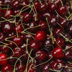 Australia Cherry (LL)
