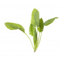 HK Organic Baby Spinach