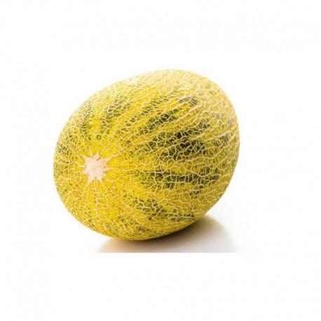 Xinjiang Hami Melon