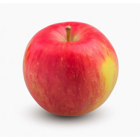 Canada Ambrosia Apples (10Pcs)