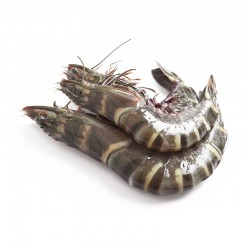 Tiger Prawn with Head