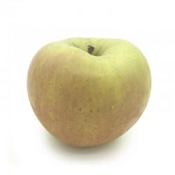 日本 青森縣「名月」蘋果