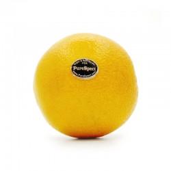 美國黑牌橙 (8個)